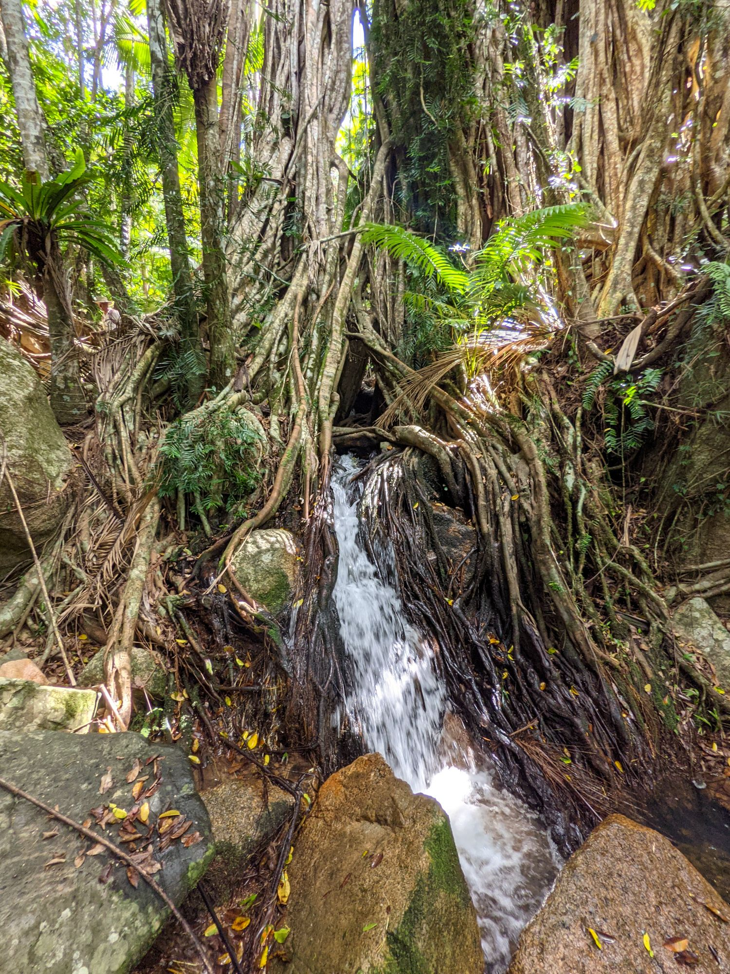 Fig Tree Falls Bambaroo