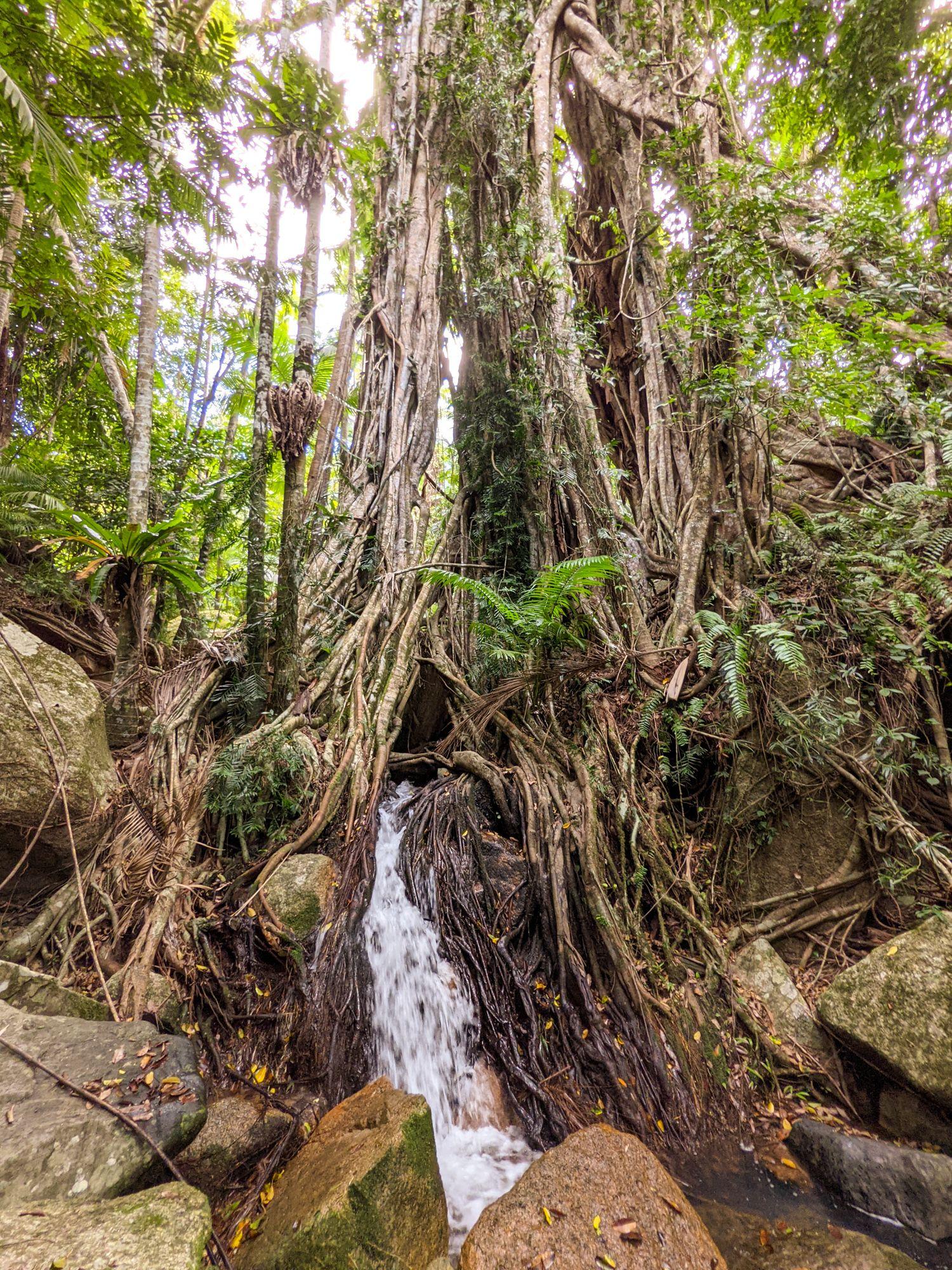 Fig Tree Falls Paluma