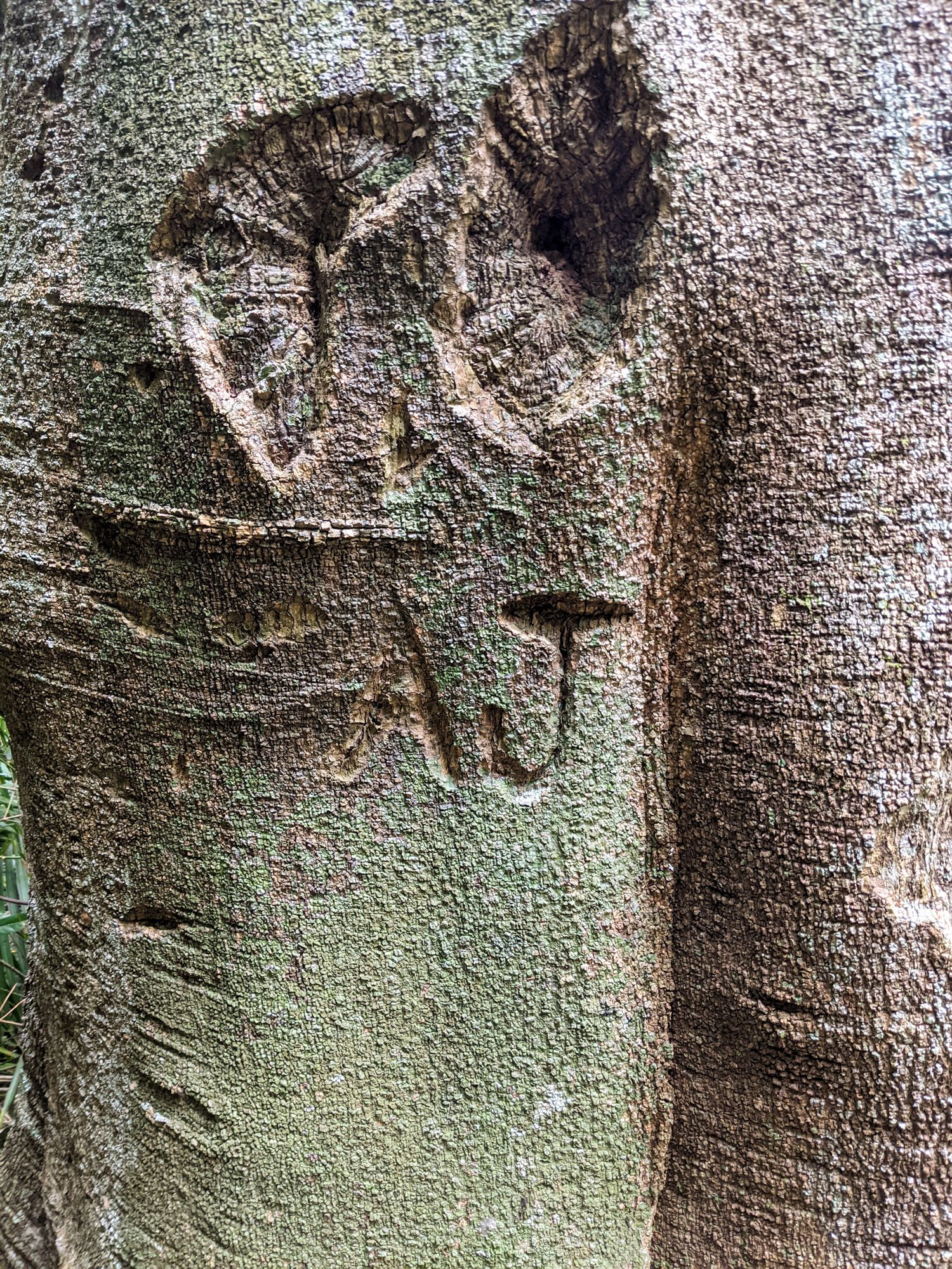 history tree carving