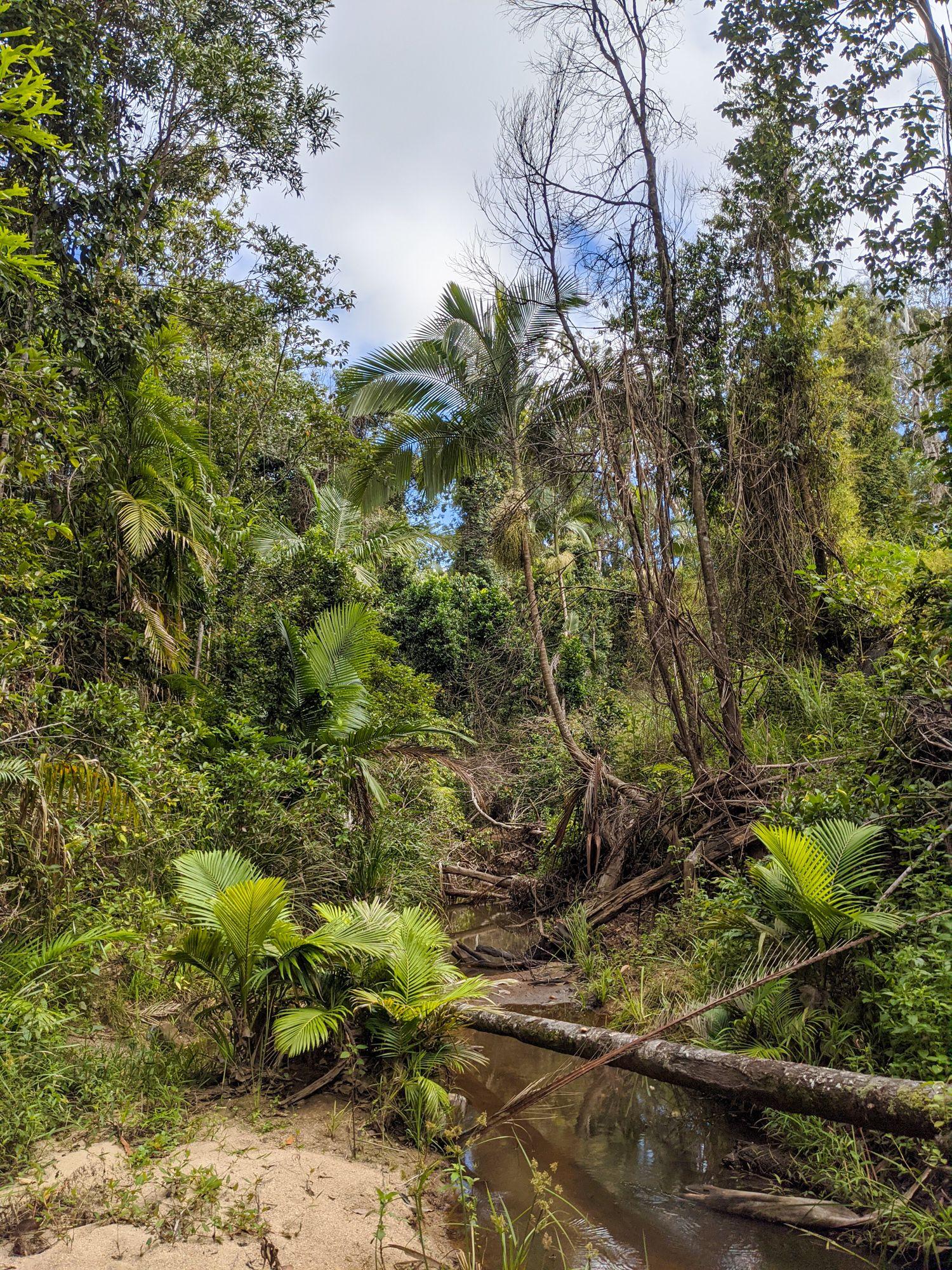 disaster creek cycolone damage