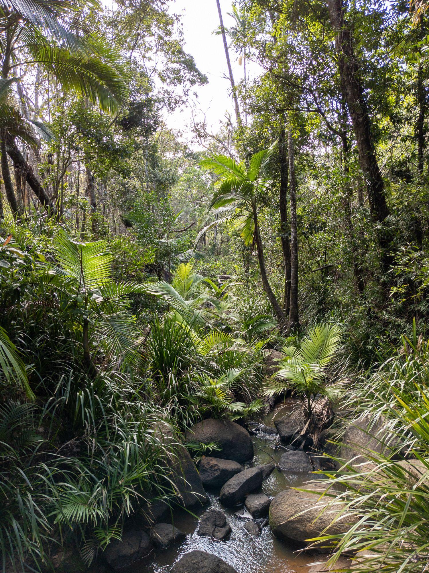disaster creek headwaters