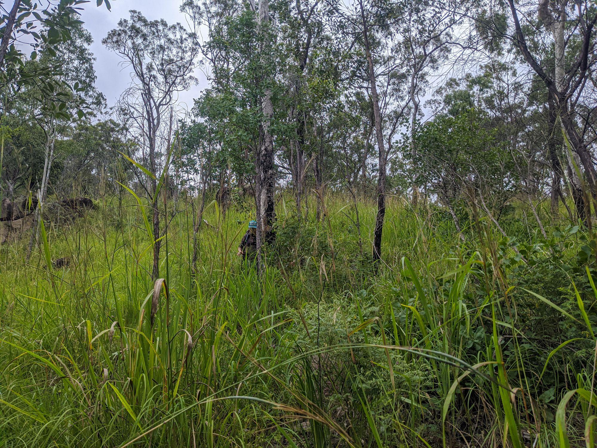 disaster creek long grass