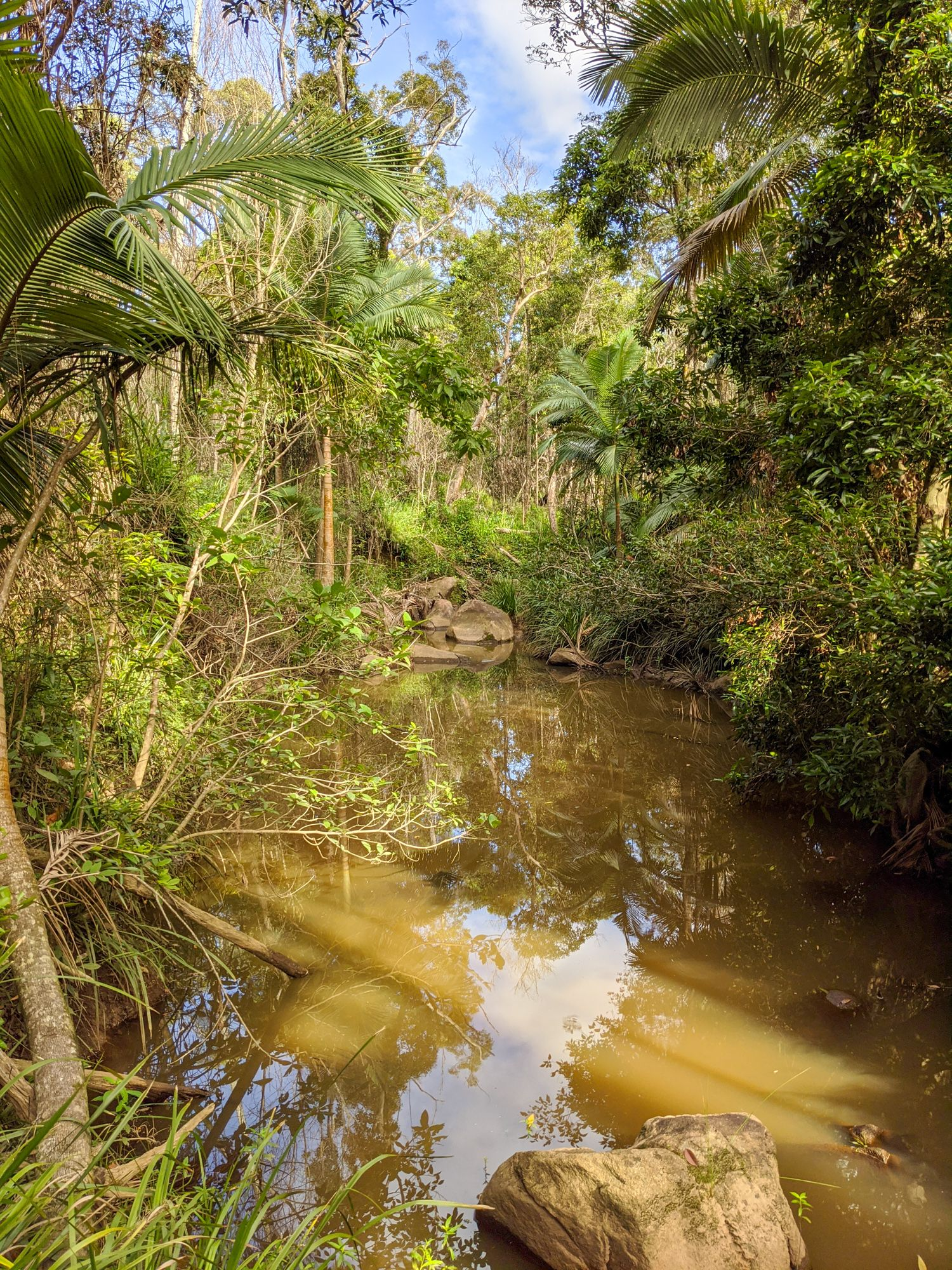 disaster creek stream