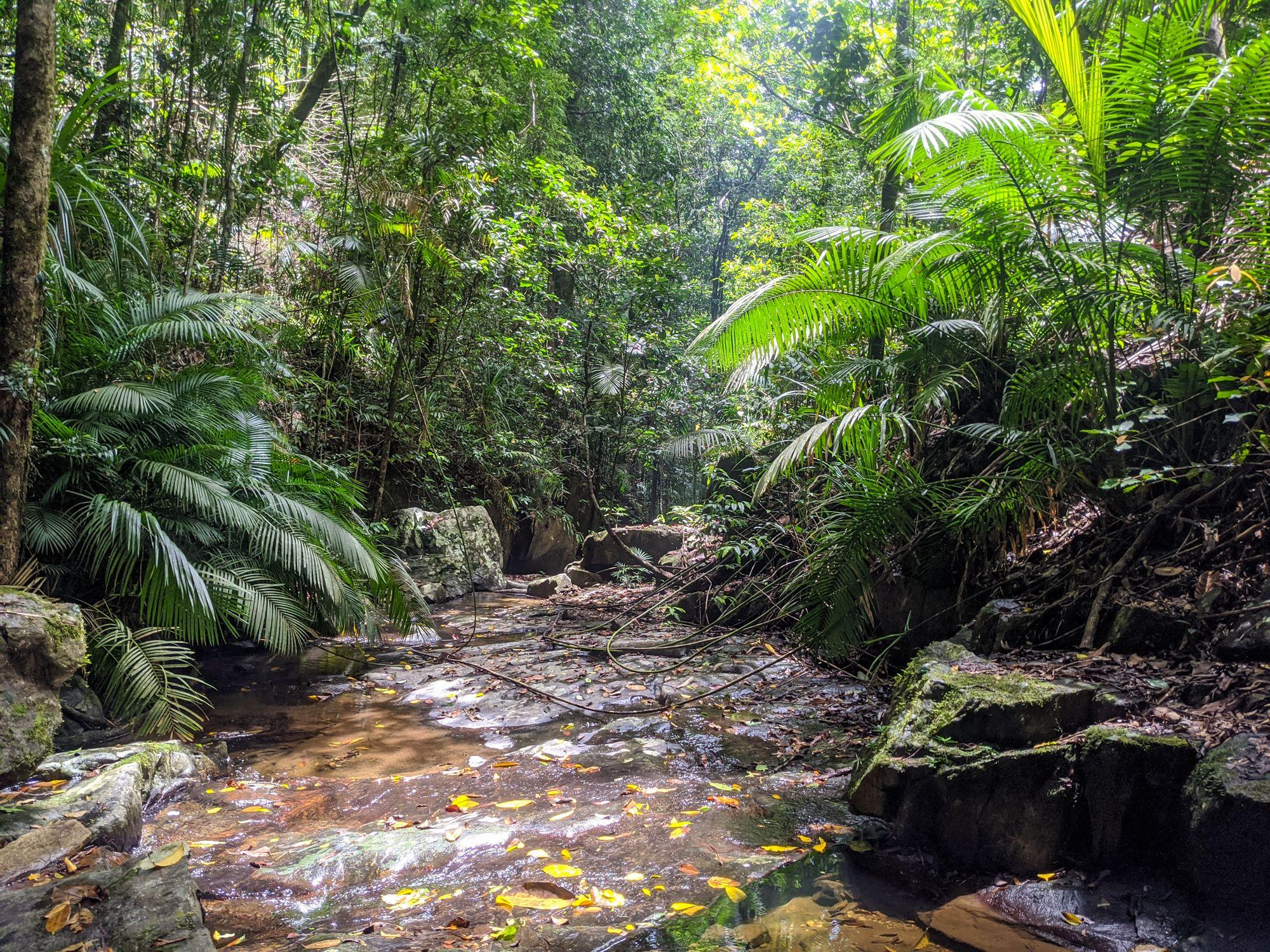 rainforest creek mowbray