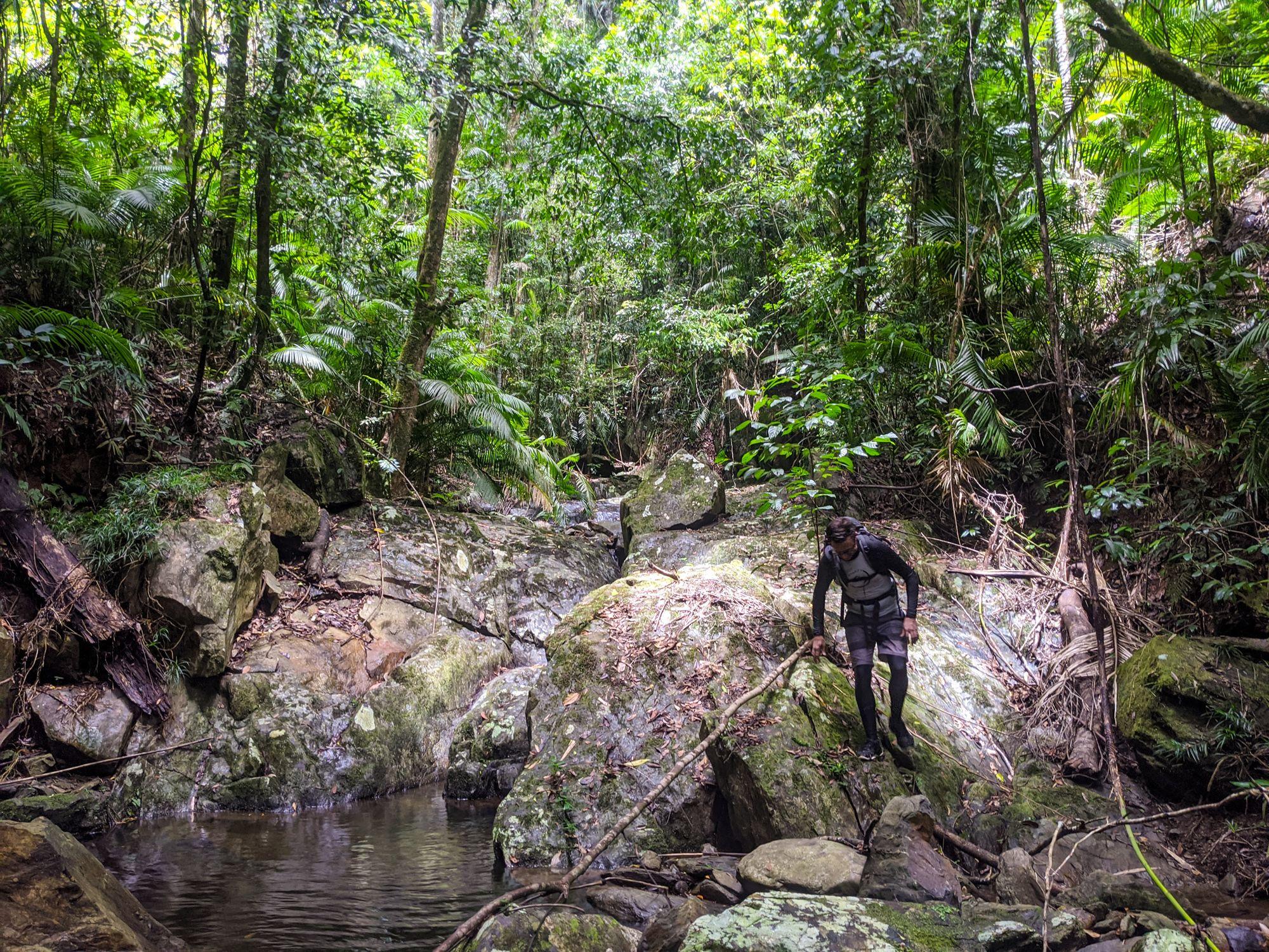 rainforest creek north queensland rock hop
