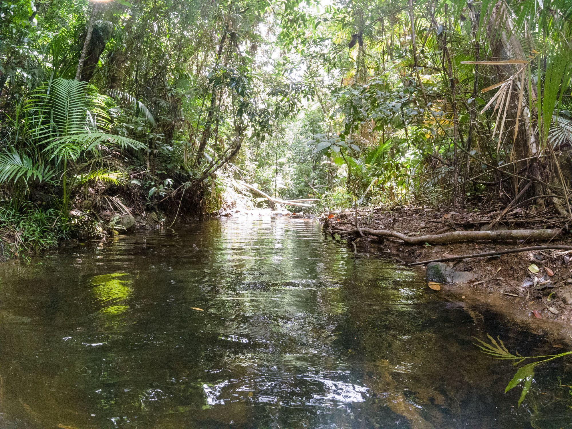 rainforest creek nowhere