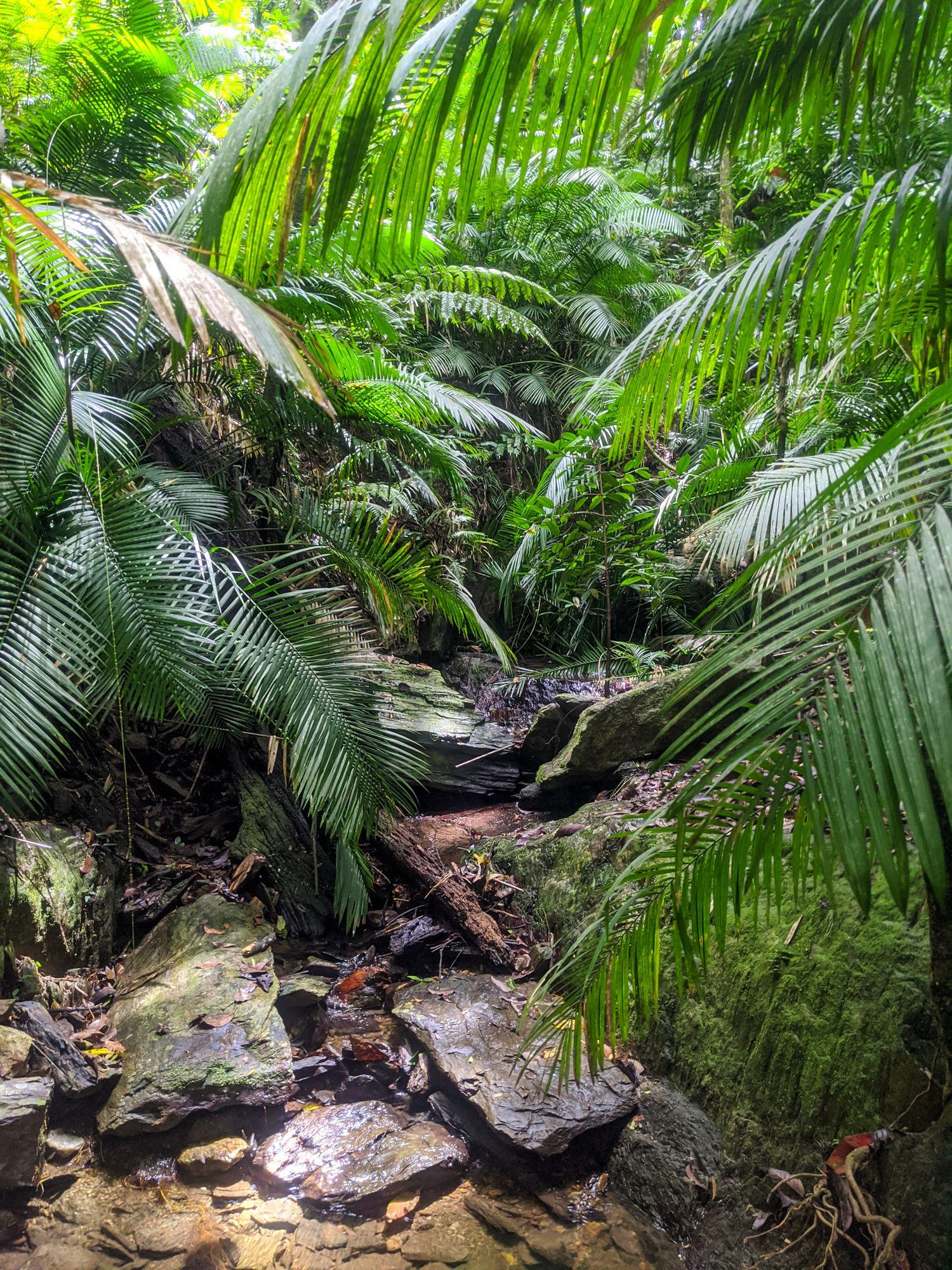 rainforest wait a while