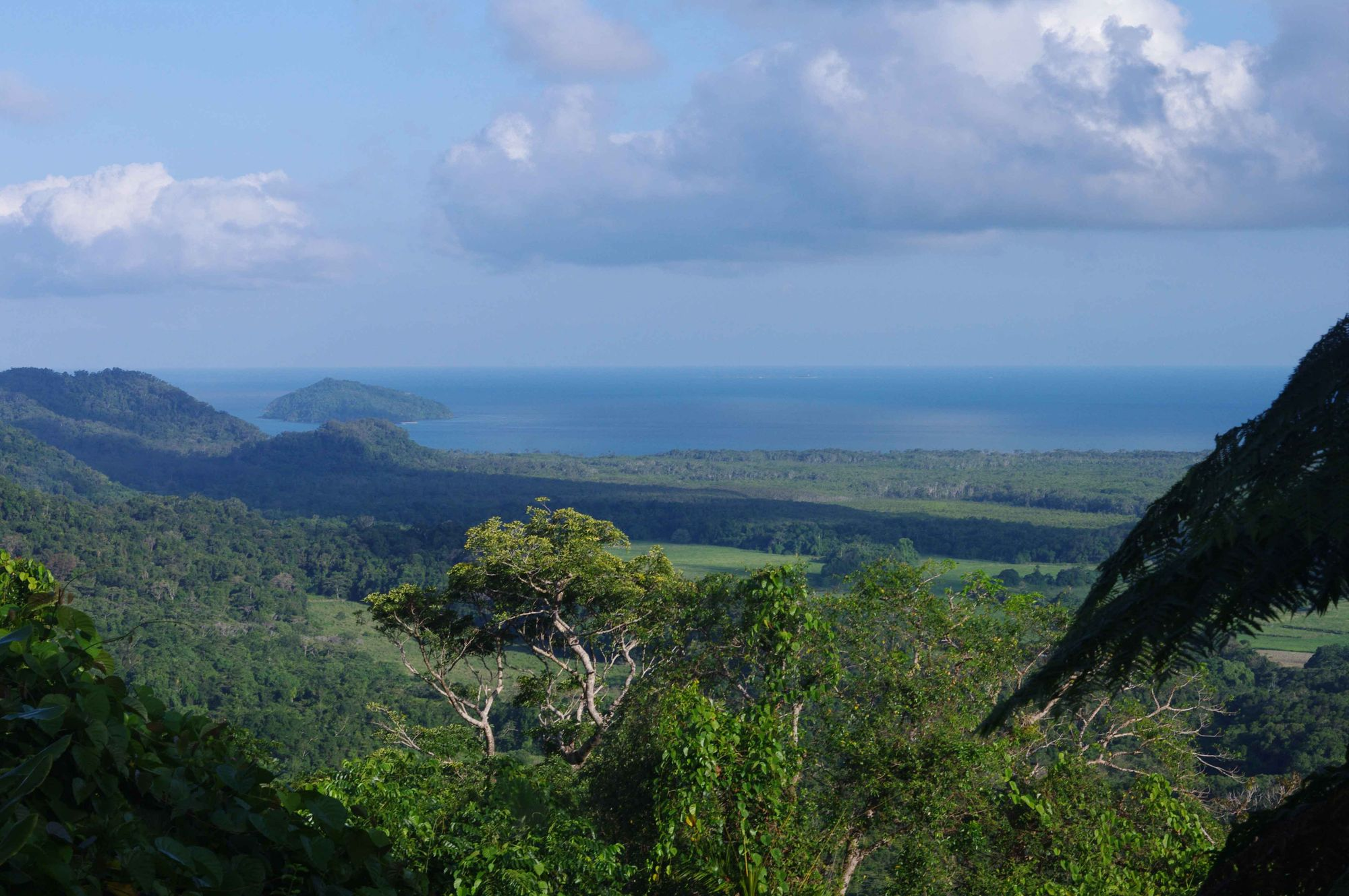 6 Must See's when driving up to Cape Tribulation
