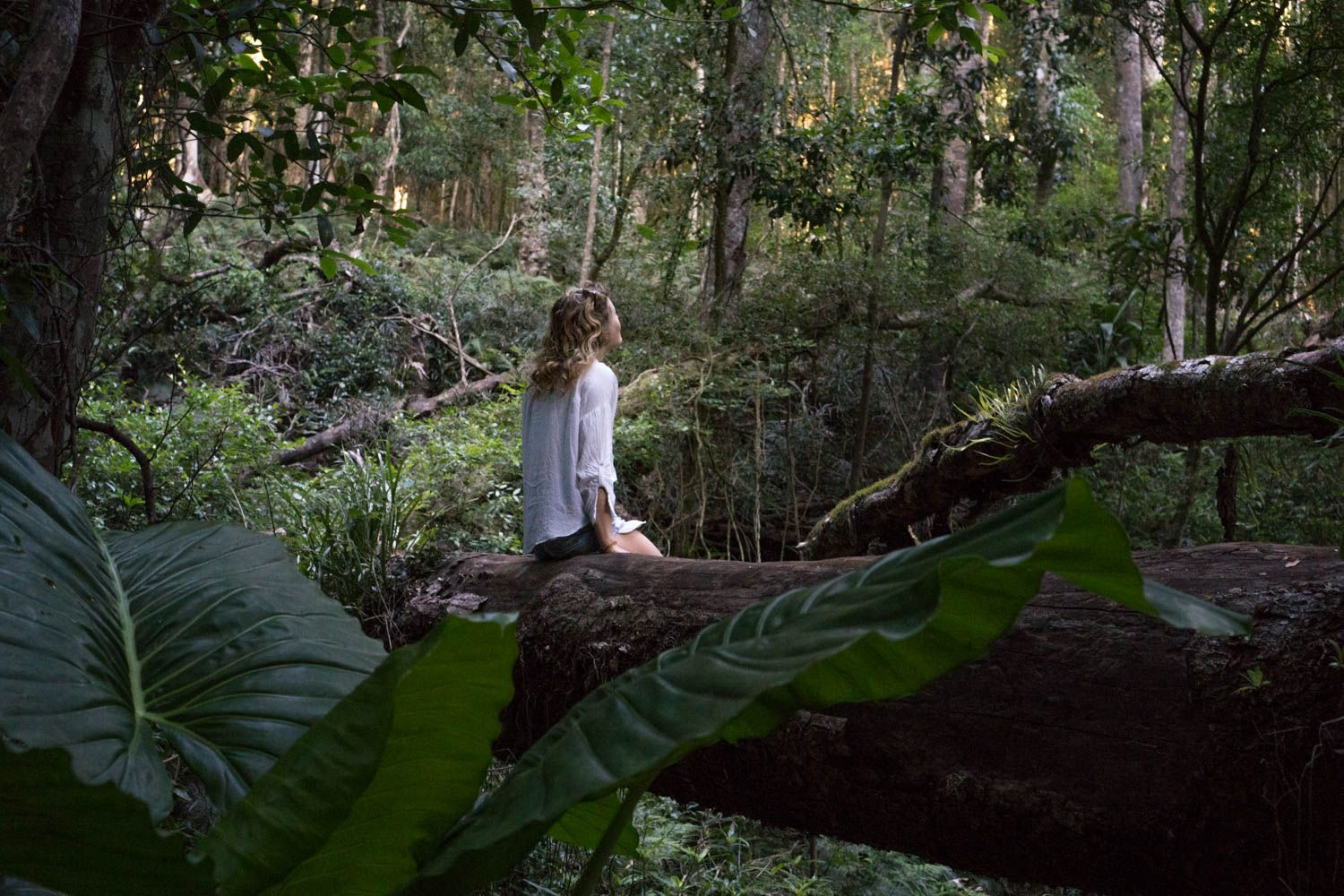 Why you should get up early to see the Bunya Mountains