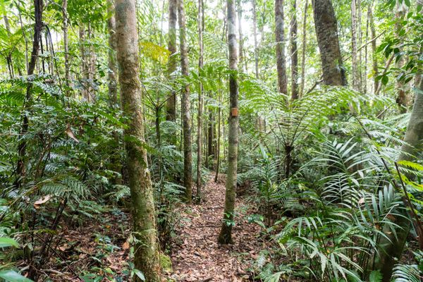 Paluma Range National Park Trails