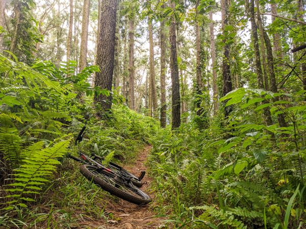 Mountain Biking Trails on Mo'orea Island, French Polynesia