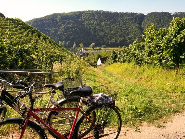 Moselle Cycle Route - Fellering to Trier to Koblenz