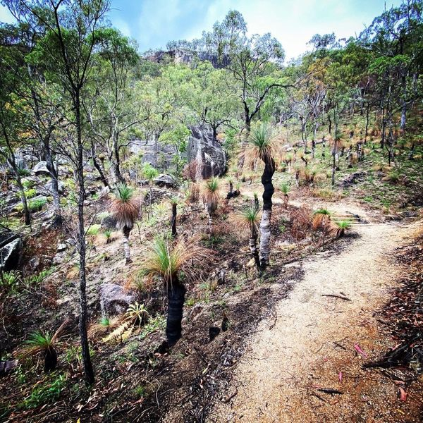 Bunda Bibandji Rock Art Walking Track